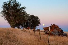 Rising moon Rancho Cordova CA